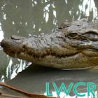 cocodrilo lwp icon