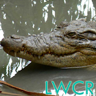 coccodrillo lwp icon