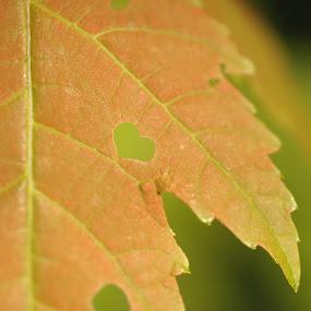 Leaf Love by Bill Morris - Nature Up Close Leaves & Grasses ( heart, nature, leaf, valentine, closeup )
