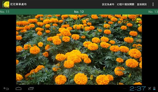 仁山植物園-花花草草桌布