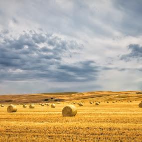 Harvest by Gary Davenport - Landscapes Prairies, Meadows & Fields ( clouds, wheat, palouse, bales, harvest )