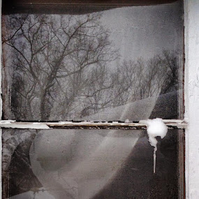 Winter window. by Laura Ofeno - Novices Only Objects & Still Life
