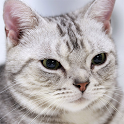 Cute Cats Gallery Wallpapers 2 icon