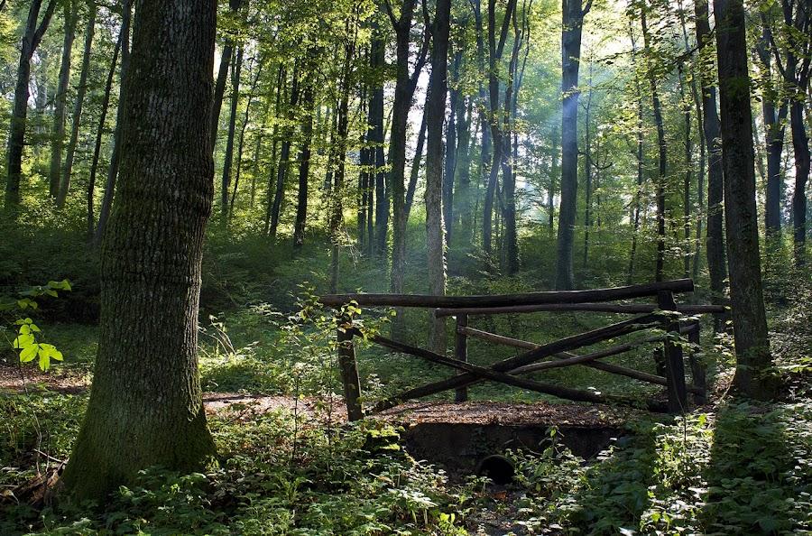 by Siniša Almaši - City,  Street & Park  City Parks ( wood, tree, park, nature, morning, light,  )