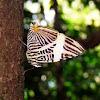 Zebra Mosaic - Mariposa Cebra