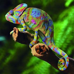 Animals Jigsaw Puzzles - náhled