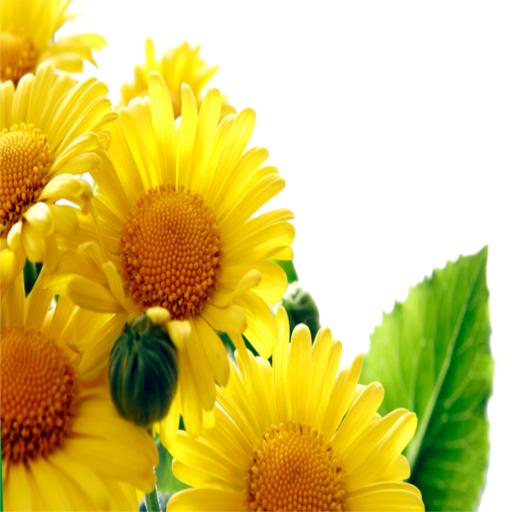 娛樂App|Widgets store: Flower-4 LOGO-3C達人阿輝的APP