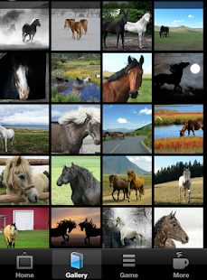 Horse Wallpapers & Backgrounds by iMod Apps- screenshot thumbnail