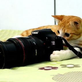 cat-tographer by Ryan Hortizuela - Animals - Cats Playing ( canon, cat, camera, photography )