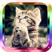 Cute Kittens HD Live Wallpaper