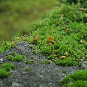 Cling by Ash Swetland - Nature Up Close Mushrooms & Fungi ( plant, fluffy, damp, green, tropical, moss, rock )