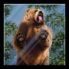 Bear Licks Live Wallpaper icon
