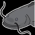 Catfish Tactics & Secret Baits 1.1 Apk