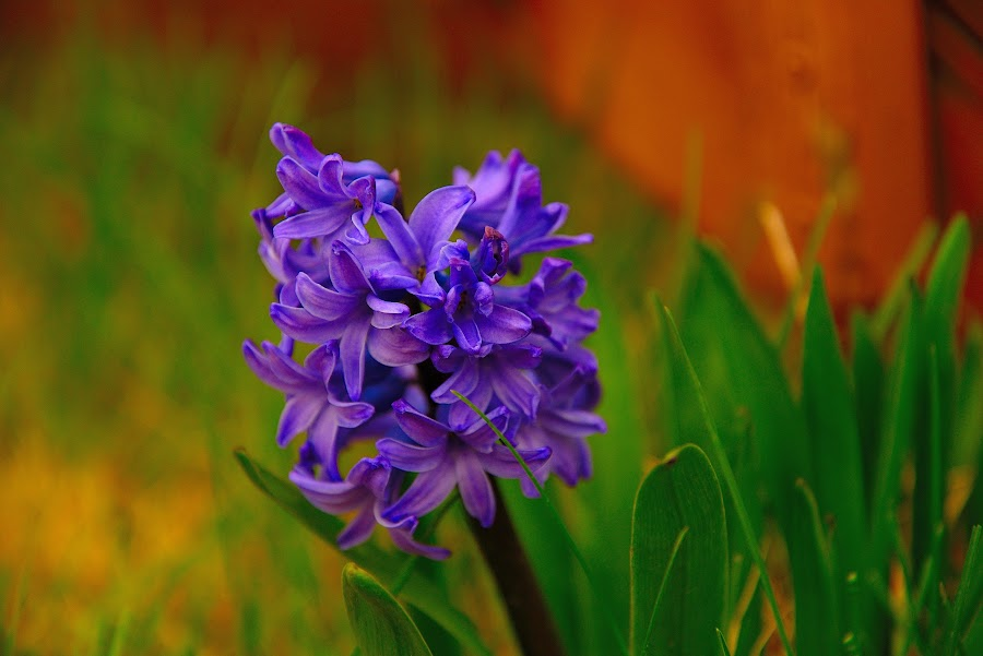 Purple flower by Jay Anderson - Flowers Single Flower ( pruple, green, flower, , Spring, springtime, outdoors )