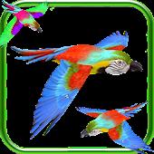 Parrot Fly 3D