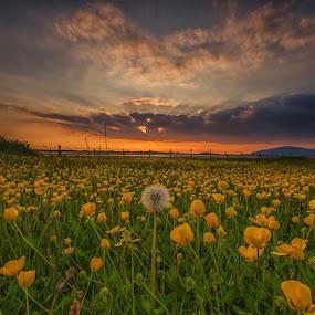 by Graham Kidd - Landscapes Prairies, Meadows & Fields