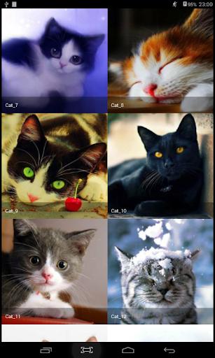 배경 화면 고양이 - 좋은 고양이