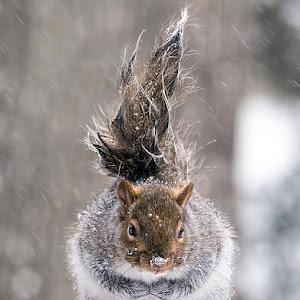 wet-furry-squirrel-P2760377-900px.jpg