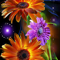 Colorful Flowers icon