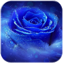 3D Romantic Rose icon
