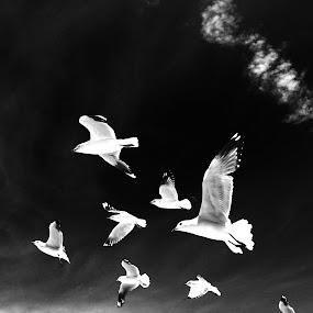Flock of Seagulls by Greg Harrington - Instagram & Mobile iPhone