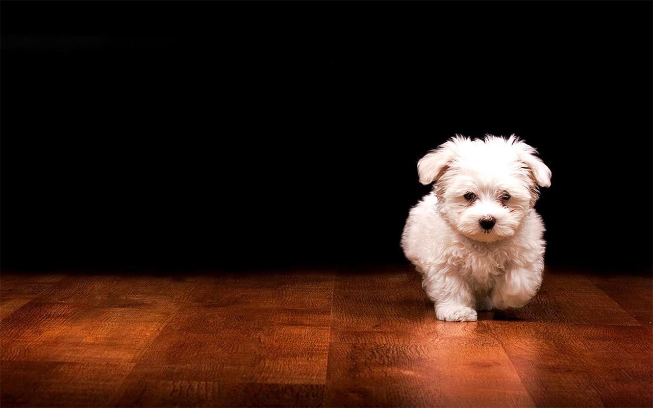 Anak Anjing Gambar Animasi Apl Android Di Google Play