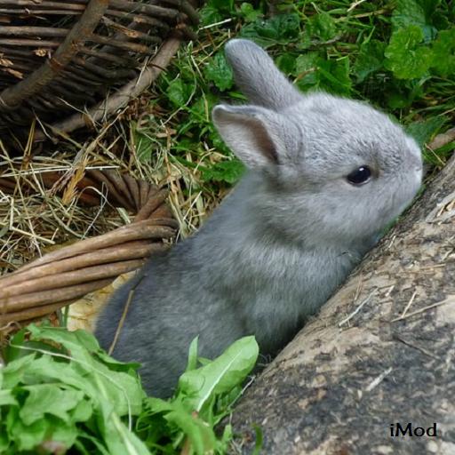 Easter Bunny Pictures LOGO-APP點子