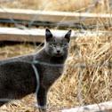 Feral Feline