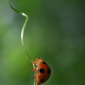 Climber by Muntazeri Abdi - Animals Insects & Spiders