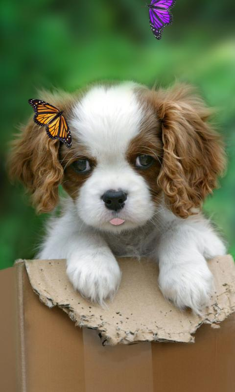 Cute puppy live wallpaper- screenshot