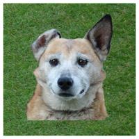Dog whistle - trainer for dog 1.3.2