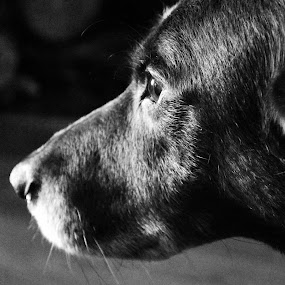 Emotion by Mikahla Dorey - Black & White Animals ( black and white, dog, emotion )