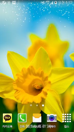 화사한노란봄꽃배경