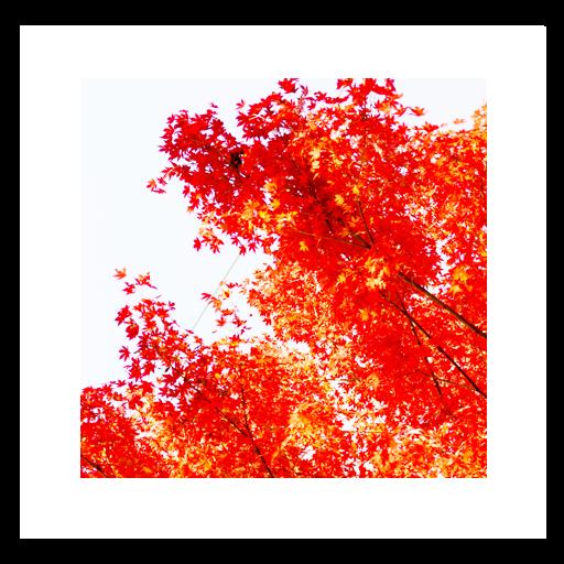 Autumn Red LiveWallpaper 娛樂 App LOGO-APP開箱王