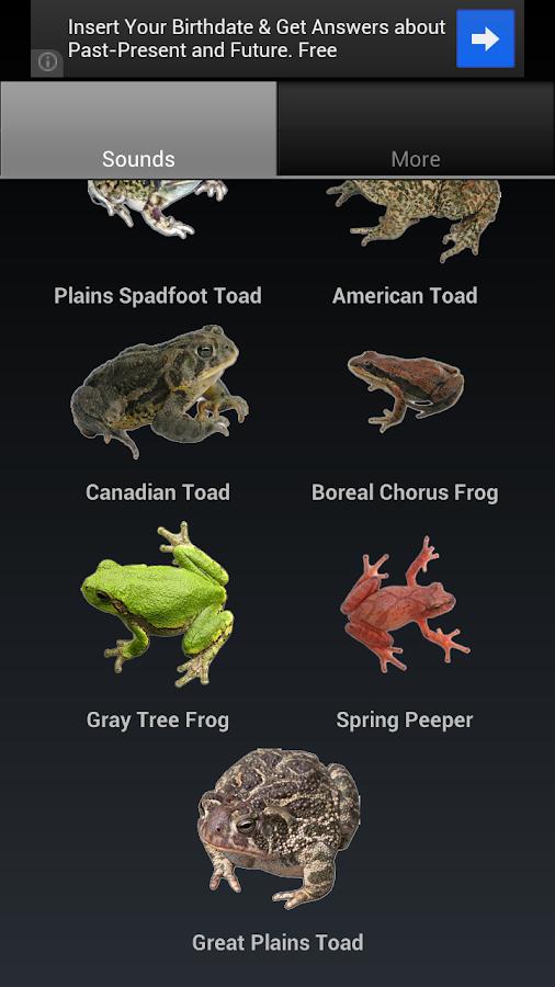 Frog Sounds - screenshot