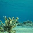 Greek Marine Life Mapping