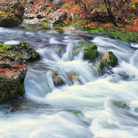 wild river by Anže Papler - Nature Up Close Water