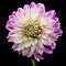 IMG_1310-15.jpg