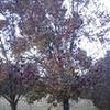 Bradford pair tree
