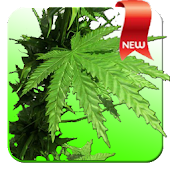 Weed 3D Live Wallpaper (Full)