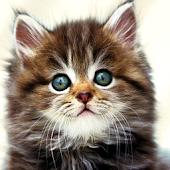 Kids puzzle – Cute Cat
