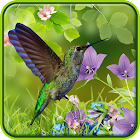 Hummingbirds wallpaper icon