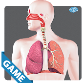 Respiratory Anatomy Game