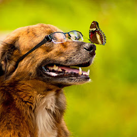 brino by Benaya Agung - Animals - Dogs Portraits ( natural light, playful, glasses, joy, cute, natural background, adorable dogs, curious, nature, happy, glass, animal, butterfly, animalia, funny, adult, portrait, sit, canine, joyful, resting, sitting, animal kingdom, pet, zoology, rest, dog, companion dog, natural )
