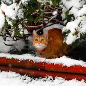 by Matt Gullick - Animals - Cats Kittens (  )