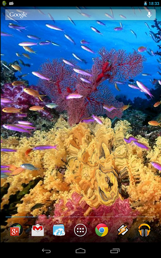 Magic Touch Coral Reef Live Wallpaper By Alex Garis Google Play United States