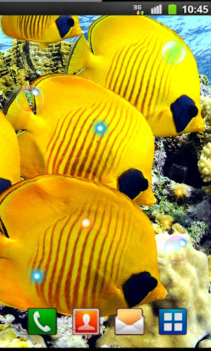 Fishes Ocean Exotic LWP