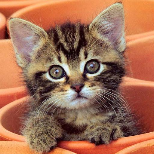 猫ジグソーパズル