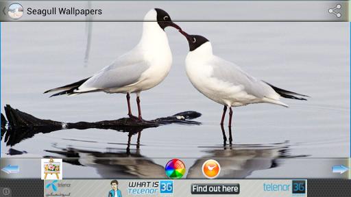 手机壁纸软件哪个好_手机壁纸软件排行 - pc6下载站