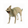 Dog Screen Cleaner 2 icon